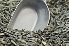Free Sunflower Seeds Stock Image - 24895131