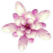 Free Echinopsis Cactus Flowers Background Stock Photo - 24898060