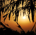 Free Sunset Royalty Free Stock Photos - 2495418
