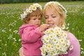 Free Beautiful Wildflowers Stock Photography - 2498972