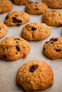 Free Chocolate Chip Cookies Royalty Free Stock Photography - 2499957
