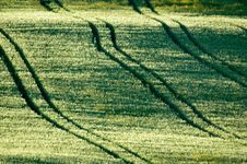 Free Fields With Tractor Tracks Stock Image - 2491351