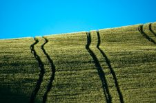 Free Fields With Tractor Tracks Royalty Free Stock Photography - 2491377