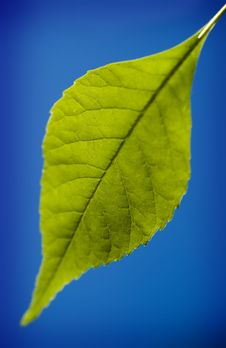 Free Green Leaf  (selective Focus) Stock Image - 2492531