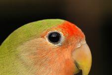Free Beautiful Parrot Pet Stock Image - 2493501