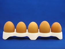 Free Eggs Stock Photos - 2494373
