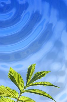 Free Green Leaf Under Water Royalty Free Stock Photo - 2496875