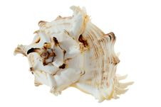 Free Spiral Shell On White Royalty Free Stock Photography - 2498297
