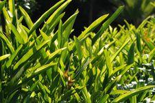 Free Big Green Leaf Stock Photo - 2498320