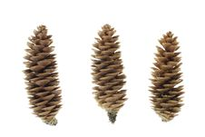 Close-up Of Fir Cone Stock Photography