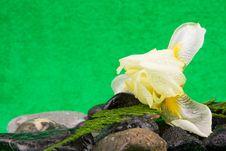 Free Spa Concept Stock Photos - 24900153