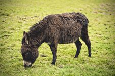 Free Brown Donkey In Meadow Eating Royalty Free Stock Images - 24901289