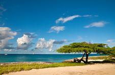 Free Divi-Divi Tree Of Aruba. Sky. Ocean. Tropics. Royalty Free Stock Images - 24903129