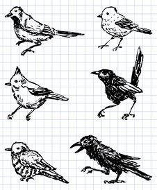 Free Drawn Birds Stock Photography - 24904202