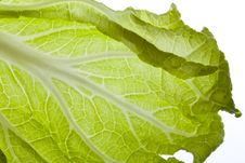 Free Green China Cabbage Stock Photo - 24908430