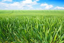 Free Spring Landscape With Green Field Stock Photography - 24909962