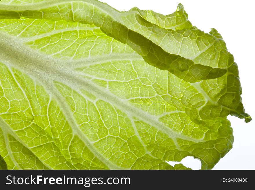 Green China Cabbage