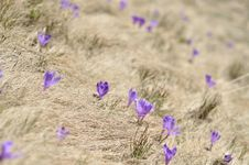 Free Springtime Is The Moment For This Purple Flower Stock Photo - 24912910