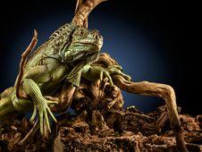 Free Creepy Dragon. Royalty Free Stock Images - 24914659