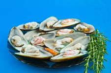 Free Mussels In White Sauce Against A Blue Background Royalty Free Stock Photography - 24918777