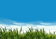 Spring Green Grass Field Royalty Free Stock Photography