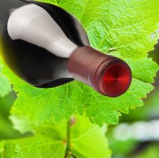 Composition: Vine Leaves And A Bottle Of Wine Stock Photo