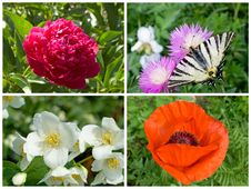 Free Flower Collection Royalty Free Stock Photo - 24927295