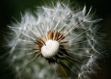 Free Dandelion Seeds Macro Stock Images - 24927844