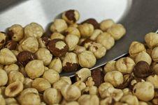 Free Hazelnuts Stock Photo - 24928360