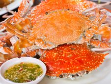 Free Steamed Crab Stock Photos - 24929563