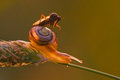 Free Dance Fly Sitting On A Snail Stock Photos - 24936373