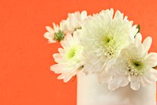 Free Chrysanthemum Flower In The Cup Stock Images - 24933454