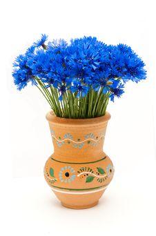 Free Beautiful Blue Cornflower Royalty Free Stock Photo - 24934835