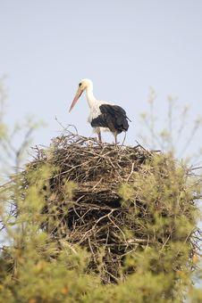 Free Baby Stork Royalty Free Stock Image - 24936956