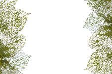 Free Leaf Texture Stock Photo - 24937390