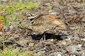 Free Killdeer Protecting Its Nest Stock Photos - 24943803
