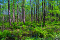 Free Forest Stock Photography - 24949532