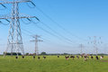 Free Power Pylons And Cows Royalty Free Stock Photo - 24978255