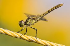 Free Yellow Dragonfly Stock Photo - 24973760
