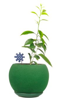 Young Plants In Green Flower Pot Stock Photos