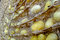 Free Silk Worm From Egg To Worm Royalty Free Stock Photos - 24979828