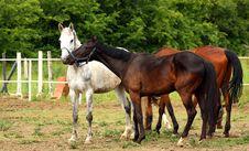 Free Horses Stock Image - 24983361