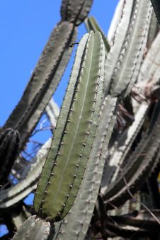 Free Cactus Stock Photos - 24988423