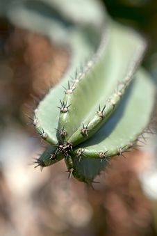 Free Cactus. Close Up Stock Photo - 24988430