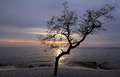 Free Thr Tree Stock Images - 24994894