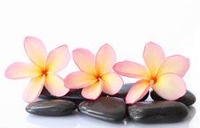 Free Stones With Frangipani. Stock Photo - 24990660