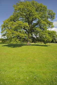 Free Village Green, Oak Tree Seat, Hanley Swan Stock Image - 24996251