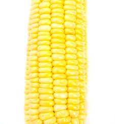 Free Corn Stock Image - 24996431