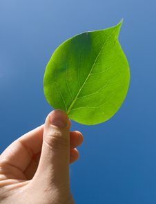 Free Holding Green Leaf In Hand Royalty Free Stock Image - 24998226