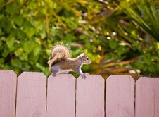 Free Squirrel Stock Photography - 24999912